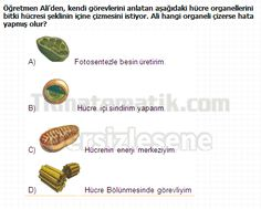 İlköğretim 6. Sınıf Fen Bilgisi Testleri Hücre Yapısı Ve Organeller testleri çöz, İlköğretim 6. Sınıf Fen Bilgisi Testleri Hücre Yapısı Ve Organeller testi çöz