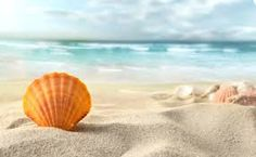 Find Shell On Beach stock images in HD and millions of other royalty-free stock photos, illustrations and vectors in the Shutterstock collection. Thousands of new, high-quality pictures added every day. Strand Wallpaper, Beach Wallpaper, Wallpaper Pc, Original Wallpaper, Big Sean, Shells And Sand, Sea Shells, 4k Pictures, Andaman And Nicobar Islands