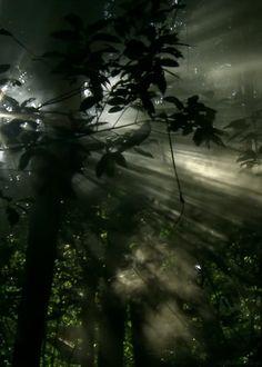gif-anime-nature-13