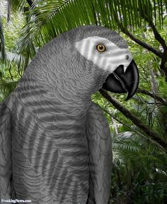 real ladies only need one shade of grey + african grey parrot - Google Search