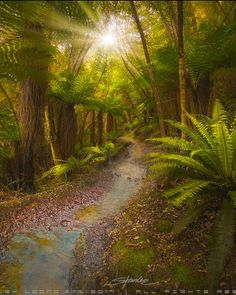 Mystic forest path (New Zealand) by Stanley Loong / 500px