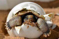 El increíble mundo de las tortugas en Fotografía | Uno grande Photo
