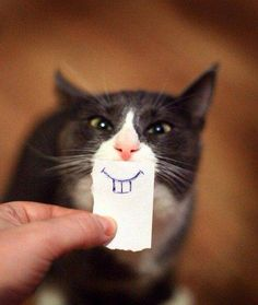 Need to try this photo one day! Cute little cat with rabbit teeth