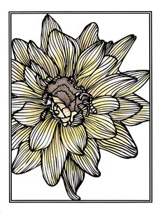 drawing dahlia patterns nature yellow line drawings