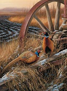 Rustic Outlook-Pheasants by Rosemary Millette : Wild Wings