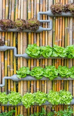 DIY Projects   How To Build A Do It Yourself Steel Frame Vertical Garden  Planter Via