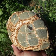 Rare Rough Whole Septarian Nodule Septarian Stone, Special Gifts For Him, Dragon Skin, Marine Environment, Calcite Crystal, Organic Matter, Displaying Collections, Fossils, The Expanse