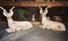 Antique shop in Bonnieux Provence - Au Détour D'une Promenade Luberon Provence, Antique Shops, Decoration, Antiques, Animals, Shopping, Cement, Decor, Antiquities