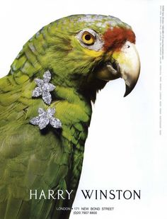Harry Winston by photographer Laziz Hamani - Animals 2007