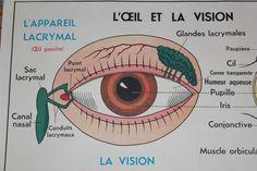 Vintage Human Anatomy French school poster  L'Oeil par lojaVintage, €98,00