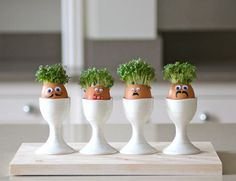 Cress seeds and a blown egg with a face drawn on to grow them in