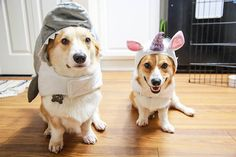 Jaws the dog and a Unicorg! Molli was already both of these for her first and second Halloween. What to do for her third?
