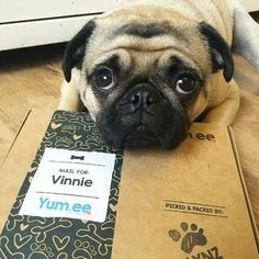 """Word on the street is these treats are mine.""  Get a free box of hand baked treats for your dog!"