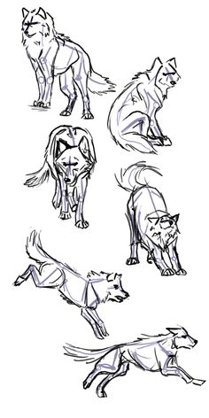 Wolf Poses - How to draw a wolf - animal drawing reference