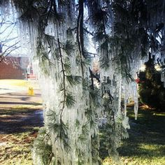Coldest morning in 103 years for Queensland capital. Stanthorpe, where this was taken, was even colder!