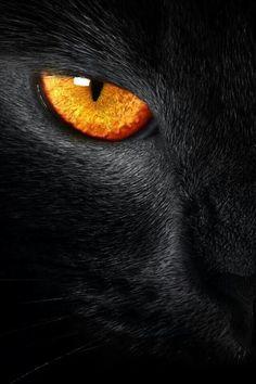 Kitty eye
