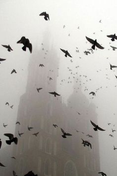 fog, birds, black and white Foto Art, Dragon Age, Belle Photo, Black And White Photography, Storyboard, Mists, Art Photography, Creative Photography, Movement Photography