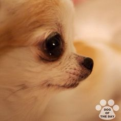 DOG OF THE DAY   @honey____  Mar.18,2012  #dogofthedayjp - @dogoftheday- #webstagram