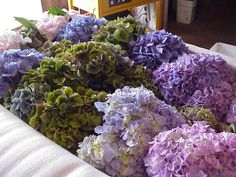 ARE HYDRANGEAS THE FLOWERS FOR YOU? Order directly from growers, SAVE MONEY and cute out the middle man (or men).  SEARCH THE NET FOR GROWERS OF YOUR FAVORITE FLOWERS!