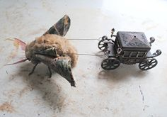 Moth pulling a tiny coach By Mister Finch whoa.