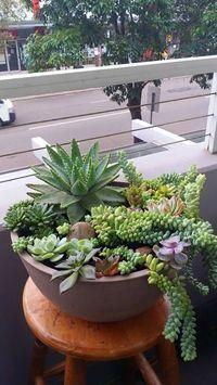 Terrário em vaso grande para a varanda. #vaso #terrário #terrarium