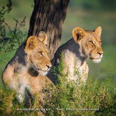 Wild beauty - via Andrew Aveley