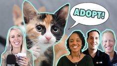 Foster Kittens, Cats And Kittens, Cat Info, All About Cats, Cat Health, Orphan, Animal Shelter, Adoption, Animals