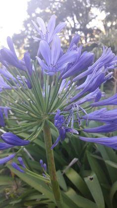 #photo #photography #tumblr #plantas #nature #naturaleza #foto #fotografia