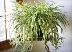 9комнатных растений, которые отлично чистят воздух