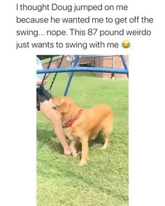 Funny Animal Jokes, Funny Animal Videos, Animal Memes, Dog Videos, Hilarious Sayings, Funny Signs, Cute Funny Dogs, Cute Funny Animals, Cute Big Dogs