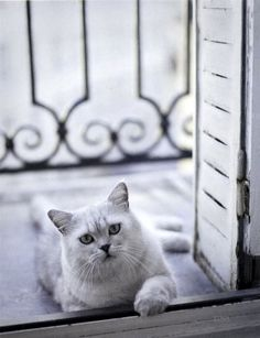 "Rachael Mckenna Photographer      ""Les Chats de France"""