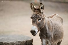 The booming demand for donkey skins fuelled by an obsession with a traditional Chinese medicine