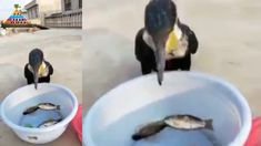 Balıkları Mideye İndiren Kuş