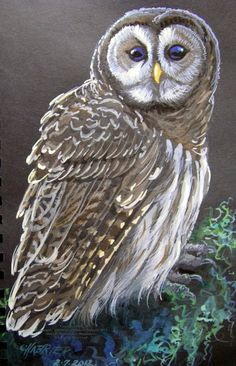 """""""Cautious Little Owl"""" par Anne E. Shoemaker-Magdaleno (HouseofChabrier)"""