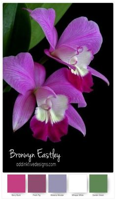 Stampin' Up! Colour Combos for Paper Orchids – Part C – addinktive designs