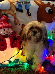 Lily's Christmas card!