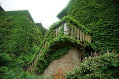 Deserted Village Stone Walls Showing Beautiful Green Design Created by Nature