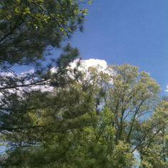 Clouds behind trees