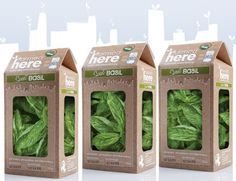 packaging microgreens - Google Search