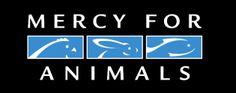 financi support, anim abus, mercyforanimalsgif 315125, graphic anim, organizations, nonprofit, merci