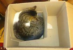 Unser Slavko... in der kleinsten Schachtel, die er finden konnte. Natürlich. Wer Katzen hat, kennt das ja :) Liebe Grüße, Lana http://lana.jetzt