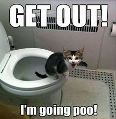 Party poo!