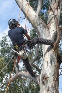 Tree pruning is essential in developing a tree with a strong structure and desirable form. Here is a quick guide of methods on how to prune trees. Tree Pruning, Lonely Planet, Trees, Gardening, Household Tips, Image, Melbourne, Strong, Projects
