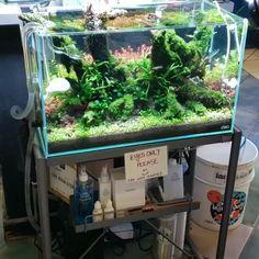 78 Ideas De Aquarium Paisajismo Acuático Acuarios Diseño De Acuario