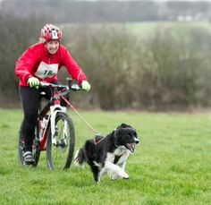 What is 'Bikejor'? Bikejor is the sport of cross country biking with your dog attached to your bike, it can be much faster and more exhilarating than canicross and is particularly suitable for dogs...