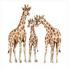 """Title: """"Giraffe Family"""". This loving giraffe family print is a reproduction of Nicky's original acrylic painting. Size: Available in 3 sizes: 8.5 x 11, 11 x 14 and 16 x 20. Please make your selection"""