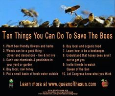 Good to know! I love bees and honey. Kinda want to try beekeeping one day. Bee Friendly Flowers, Raising Bees, I Love Bees, The Knowing, Busy Bee, Save The Bees, Bee Happy, Bees Knees, Bee Keeping