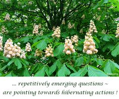 ... repetitively emerging #questions ~ are pointing towards hibernating #actions !