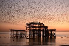 Hahnemuhle PHOTO RAG Fine Art Paper (other products available) - Starling (Sturnus vulgaris) murmuration at sunset, West Pier, Brighton, England, UK. - Image supplied by Nature Picture Library - Fine Art Print on Paper made in the UK Brighton England, England Uk, Common Starling, Sunset West, Library Images, English Channel, Uk Photos, East Sussex, Nature Pictures