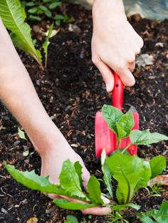 1. Pull Them  weed free garden with all natural weed killers